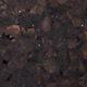 C01 - sughero nero